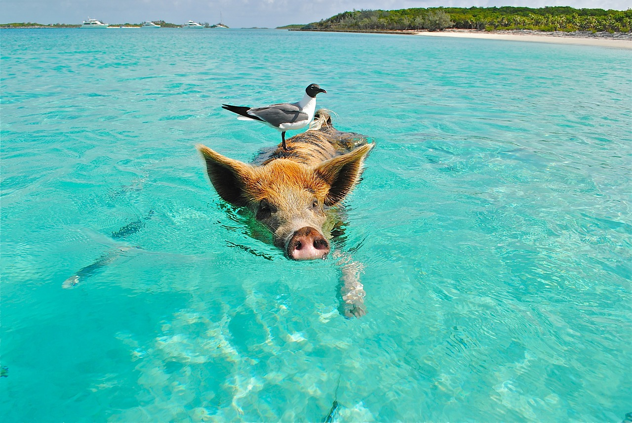 Photo No Name Cay - Bahamas