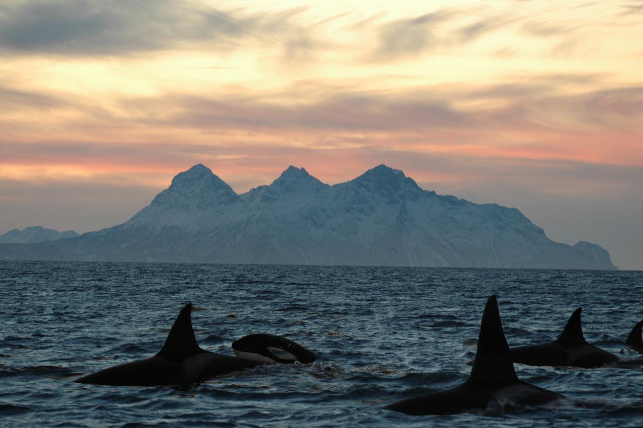 Photo Les îles Lofoten - Norvège