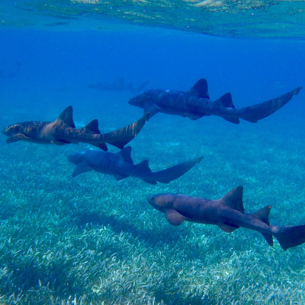 Photo Manjack Cay - Bahamas